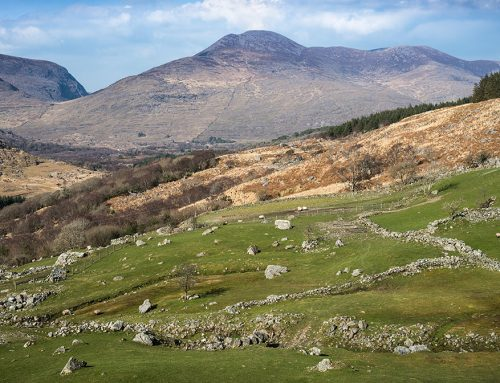 Sheep Pastures, County Kerry