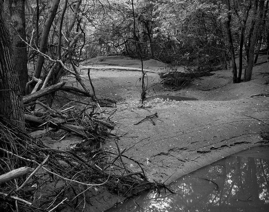 /product//forest-near-defiance-missouri-2/