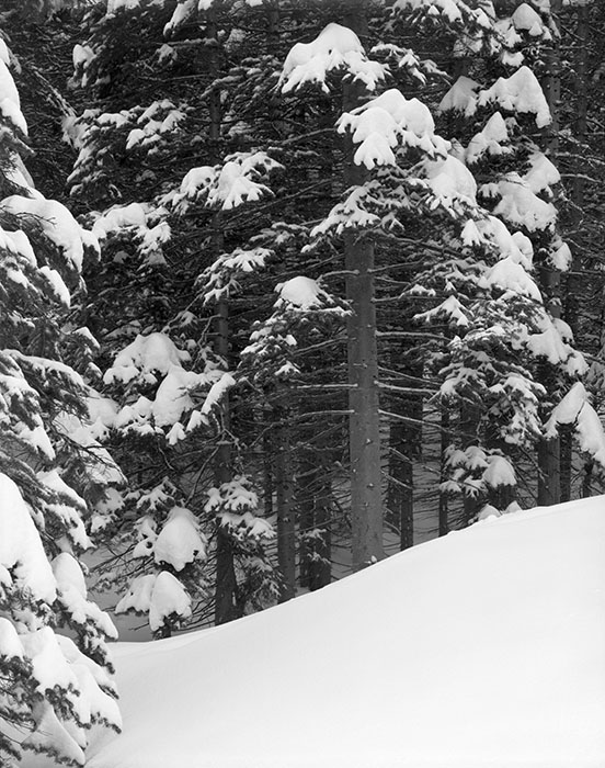 /product//snow-and-trees-rocky-mountain-national-park-colorado-2012/