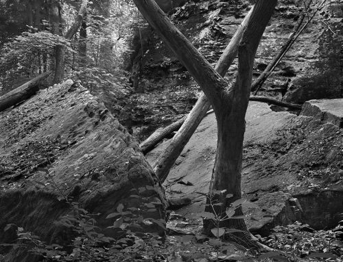 Tree and Rocks, Giant City State Park, Makanda, Illinois, 1981