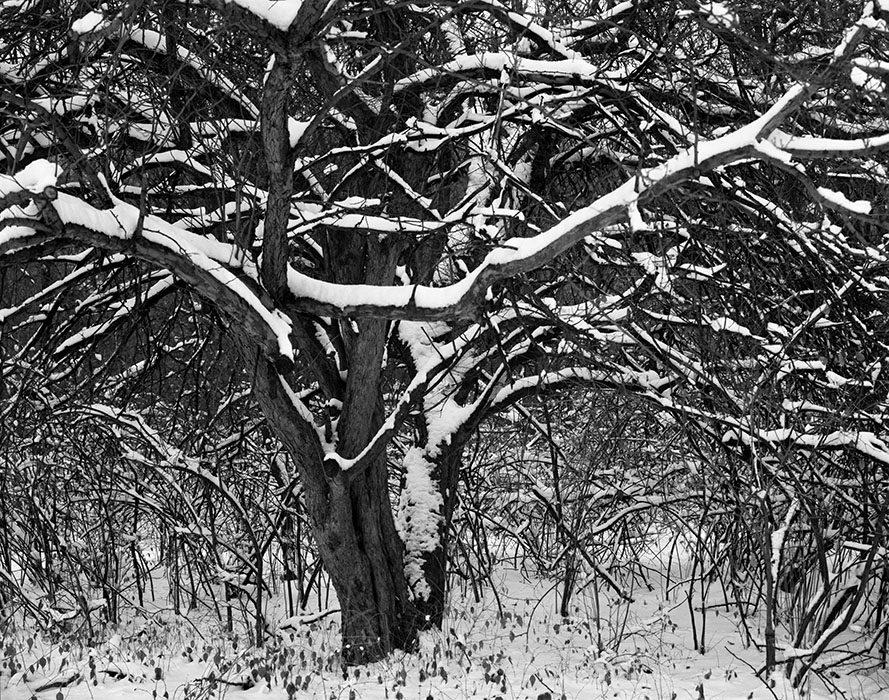 /product//fresh-snow-dusk-forest-park-st-louis-missouri-1988/