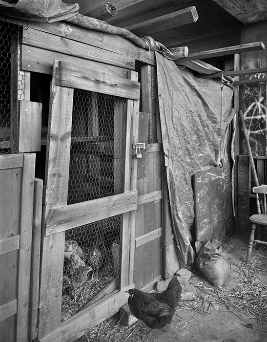 /product//chicken-coop-homeless-shelter-lacleades-landing-2021/