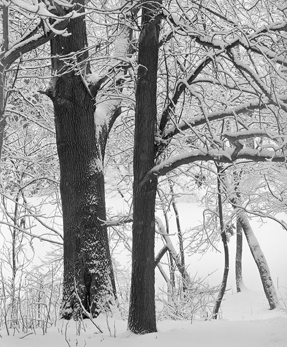 /product//fresh-snow-2-fairview-heights-illinois-2018/