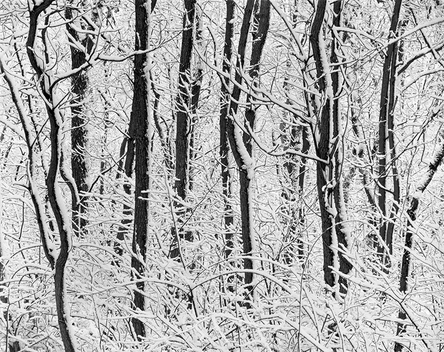 /product//fresh-snow-forest-park-2007/
