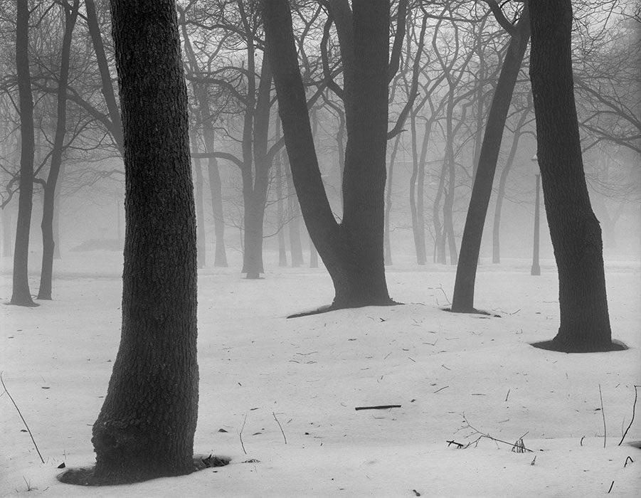 /product//snow-trees-and-fog-frontenac-missouri-1997/