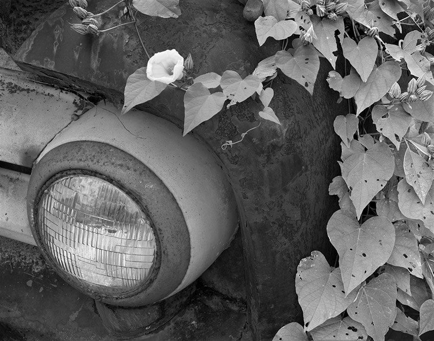 /product//old-truck-ivy-kimmswick-missouri/